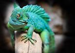 reptile-2042906_960_720.webp