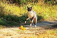 cat-1724812_960_720.jpg