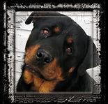 rottweiler-50848_960_720.jpg