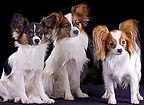 small dog 1.jpg