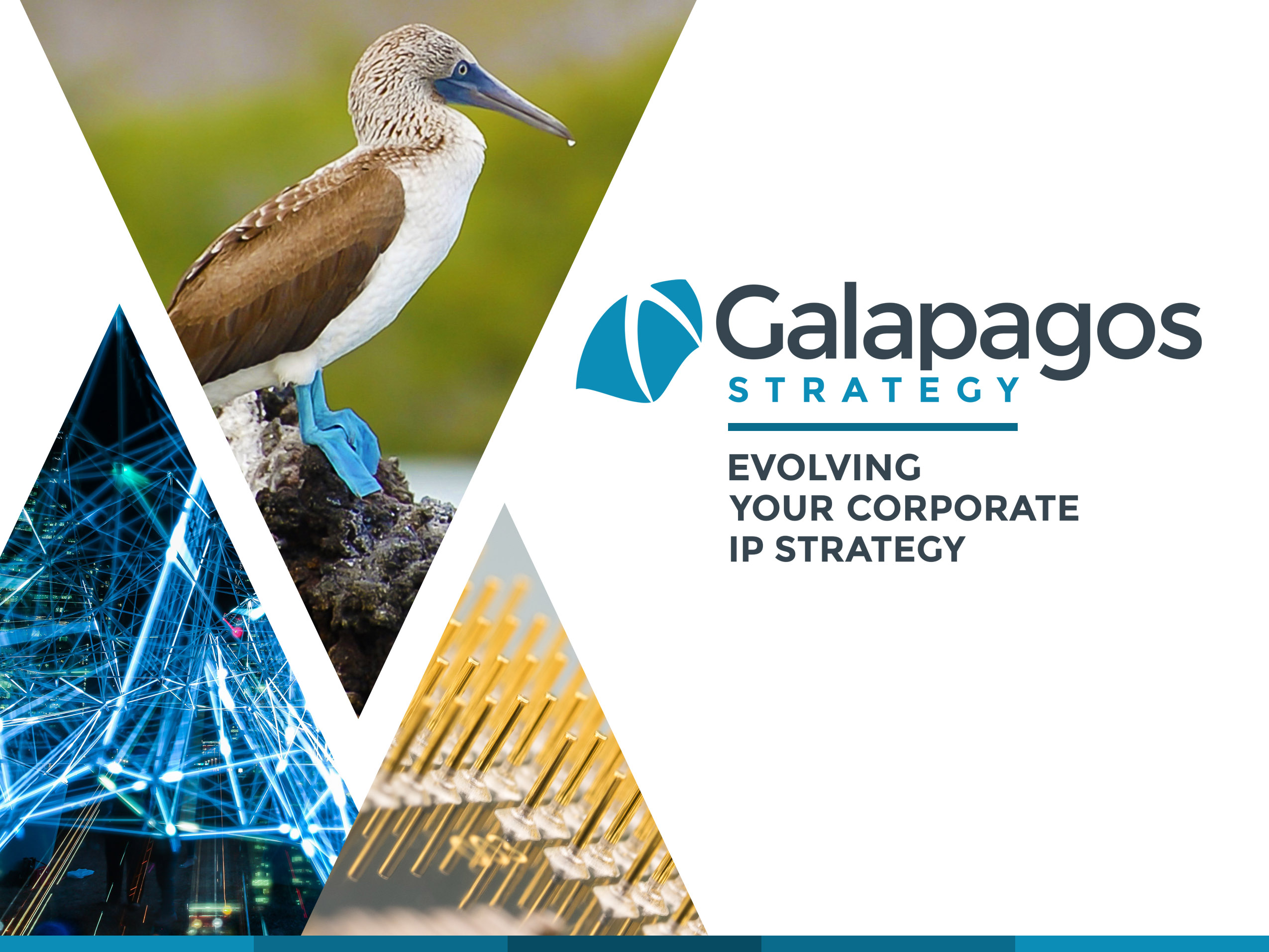 Galapagos Strategy