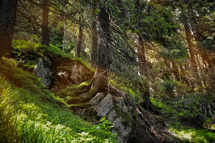forest-landscape-with-sunbeams-mossy-tre