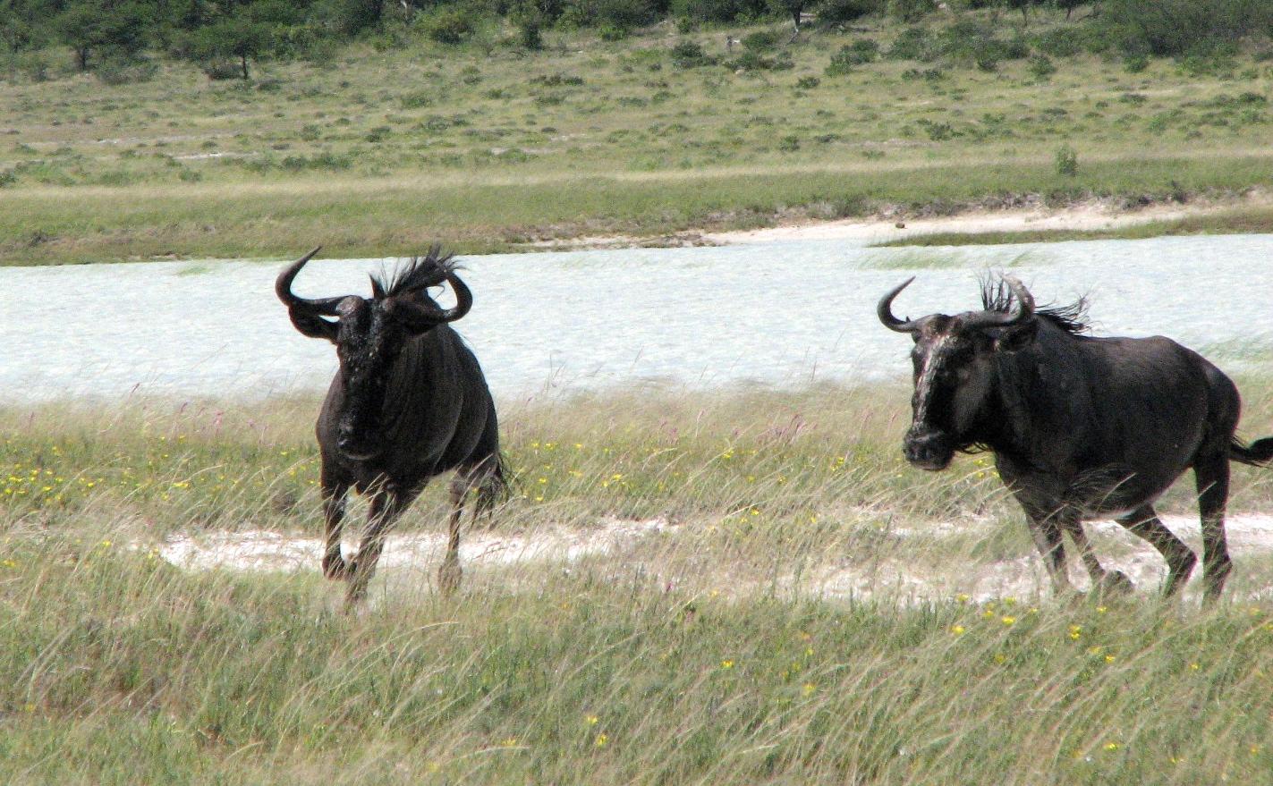 Estosha National Park