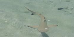 Requin au bord de la plage