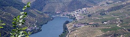 Galharda wines