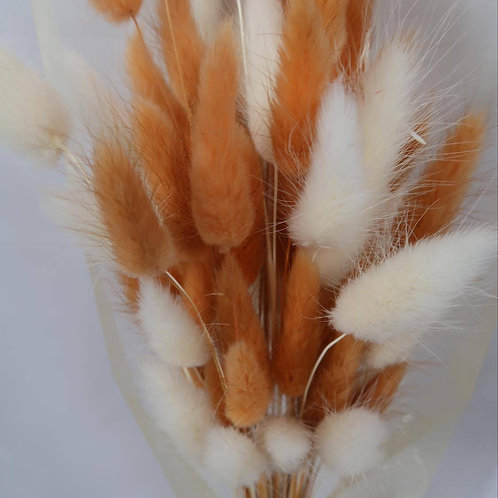 Peach & White Bunnies