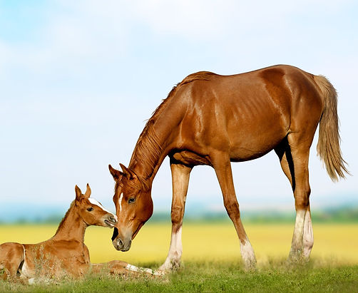mare and foal crop.jpg