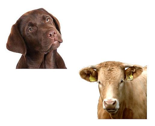 DOG AND COW HEEDS.jpg