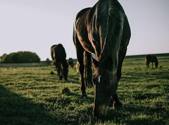 UNSPLASH HORSE 16.jpg