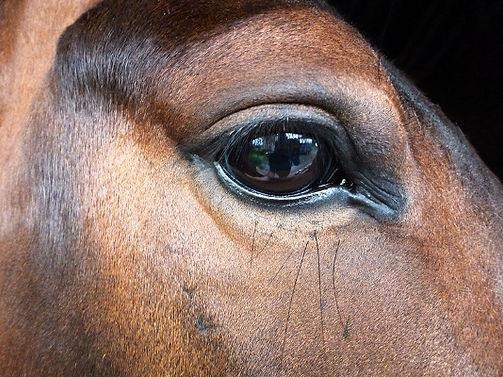 horse massage training courses, cranio-sacral therapy.
