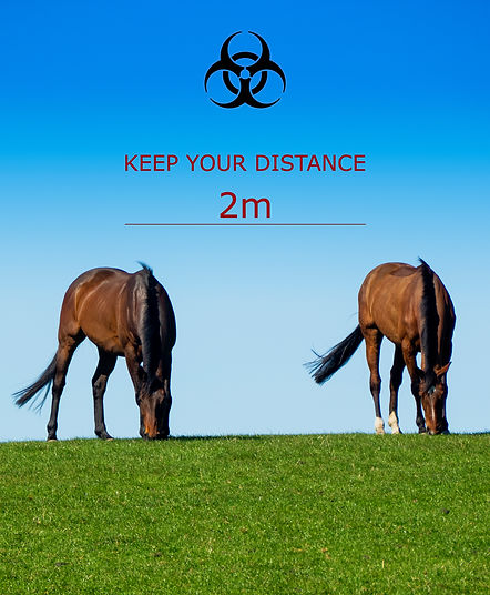 distance horses 2.jpg