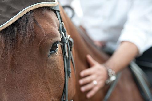 beautiful horse and rider
