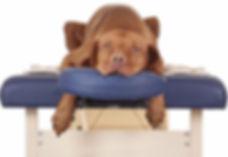 DOG COUCH WEBSITE.jpg