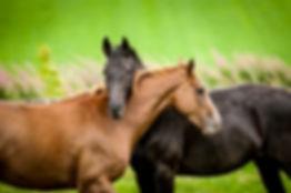 horse massage training courses two horses