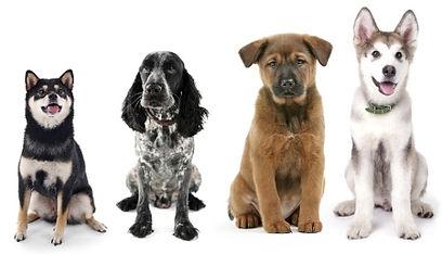 4 DOGS.jpg