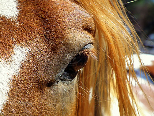 horse massage training courses, Bishop Burton College.
