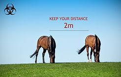 2 HORSES EBS.jpg