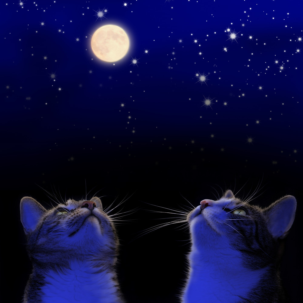 cats at moon Fotolia_61493887_Subscription_Monthly_XXL.jpg
