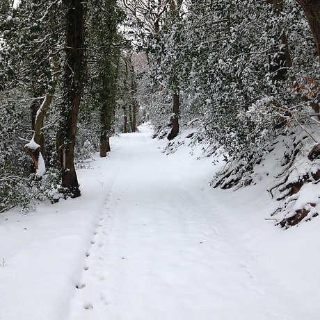 Snow in Wernog Wood