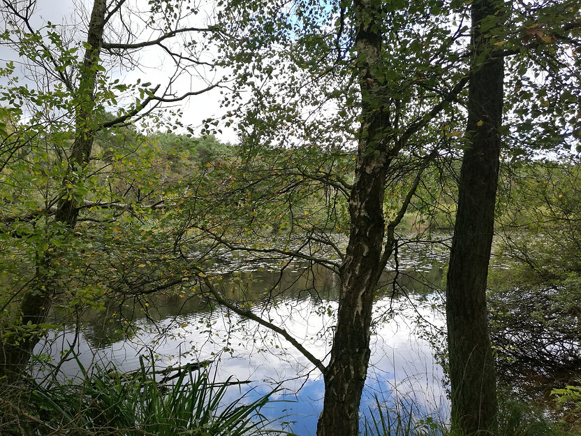 Finkenmoorsee Westseite