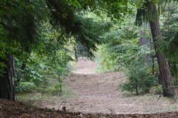 Lange Spazierwege im Wernerwald