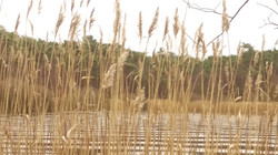 Finkenmoorsee im Herbst