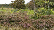 Heide vorm Wernerwald