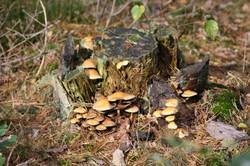 Pilzvielfalt im Wernerwalt