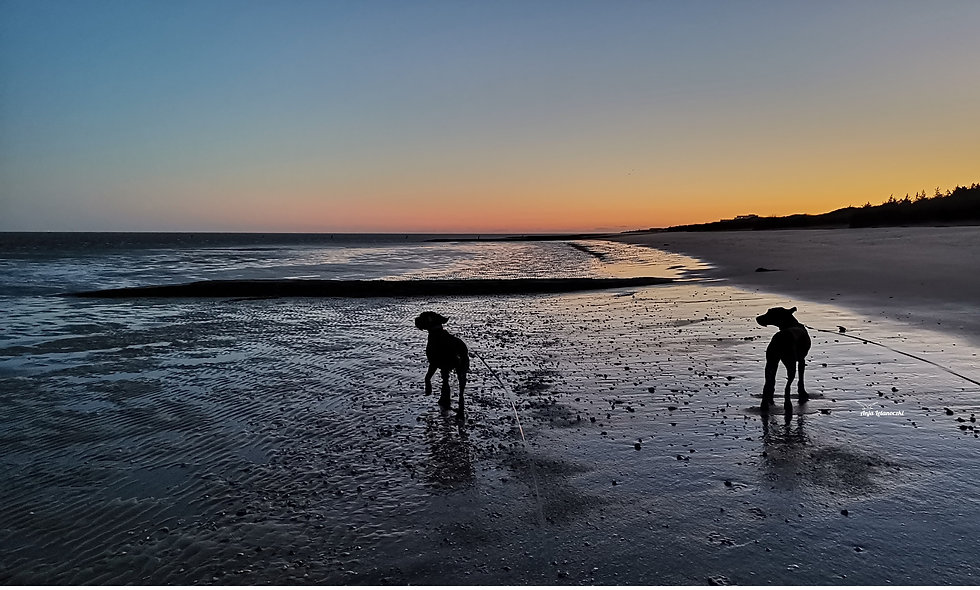 Sunrise_Duhnen_Meer_Hunde.jpg