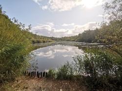 Finkenmoorsee Nordseite an der Ruhebank