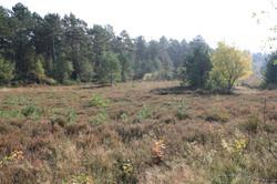 Weite Heide umrahmt von Wäldern