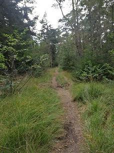 Einsamer Waldpfad im Wernerwald