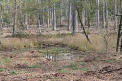 Biotope im Wernerwald