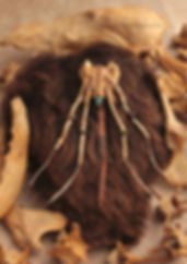 Sues fox sacral with bones.jpg