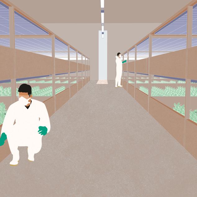 Test sapling rooms