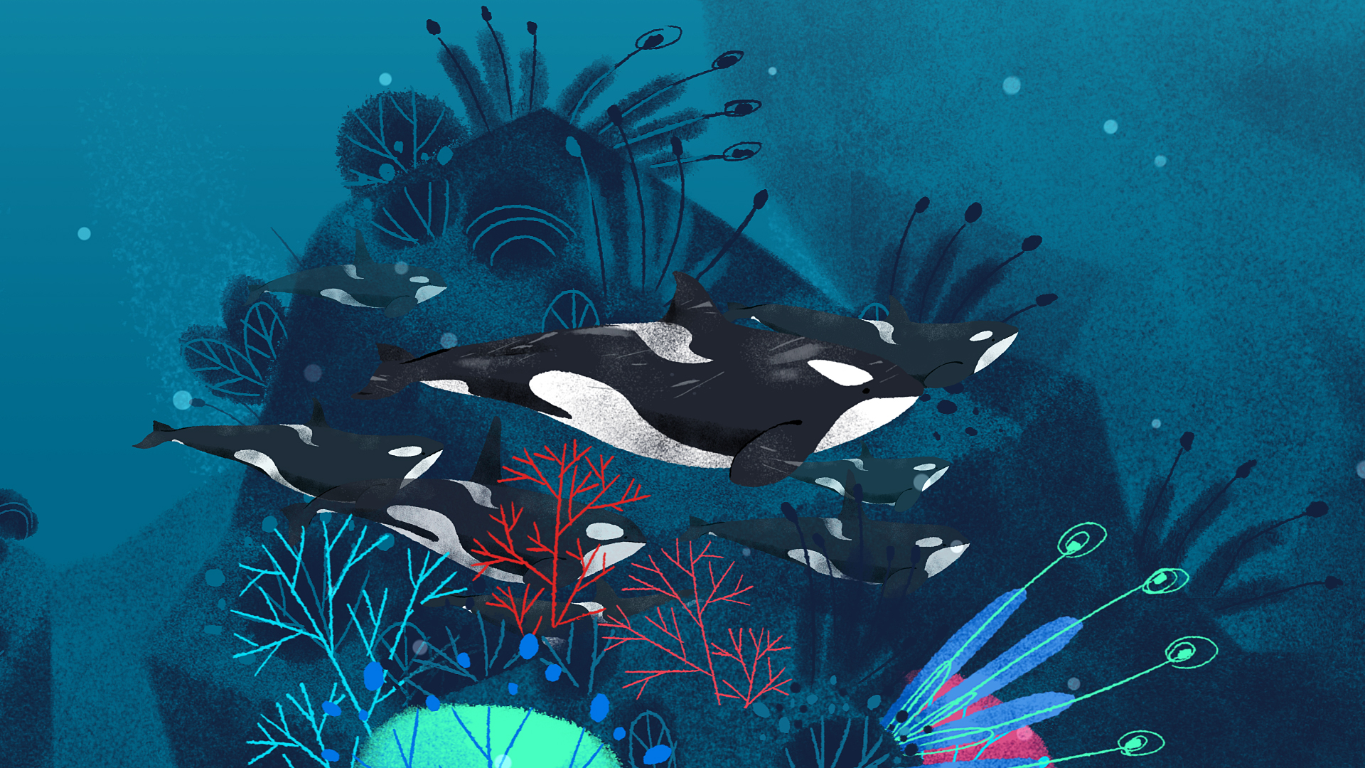 Coral reef and killer whales