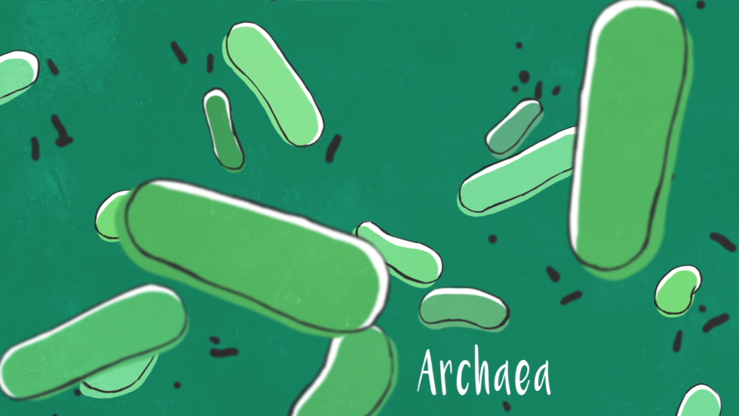single-celled organisms : archaea ..