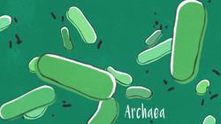 single-celled organisms : archaea ..