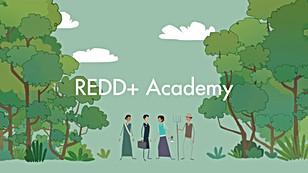 REDD+ Academy