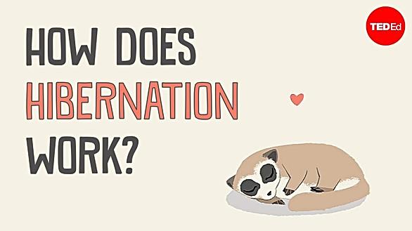 How does hibernation work?
