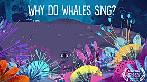 Why do whales sing?