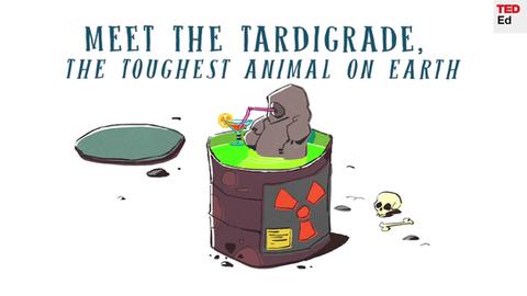 Meet the Tardigrade