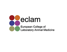 eclam.png