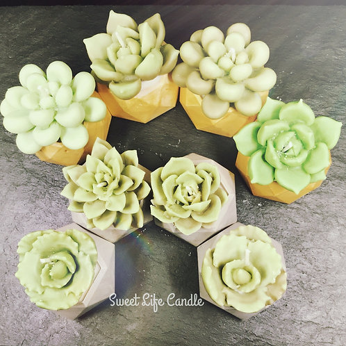 Soy Wax Container Candle (Succulent)