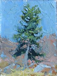 Palette Pine Oil