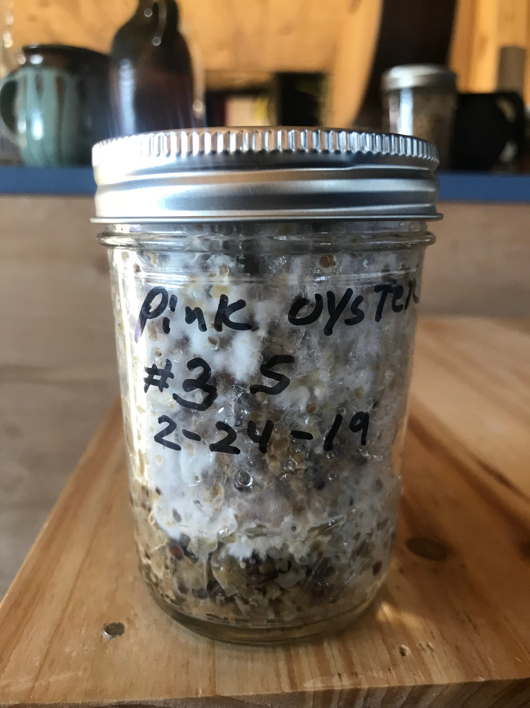 Bird seed,Corn and Soy hulls