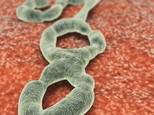 Exploring nano technology to fight Ebola Virus