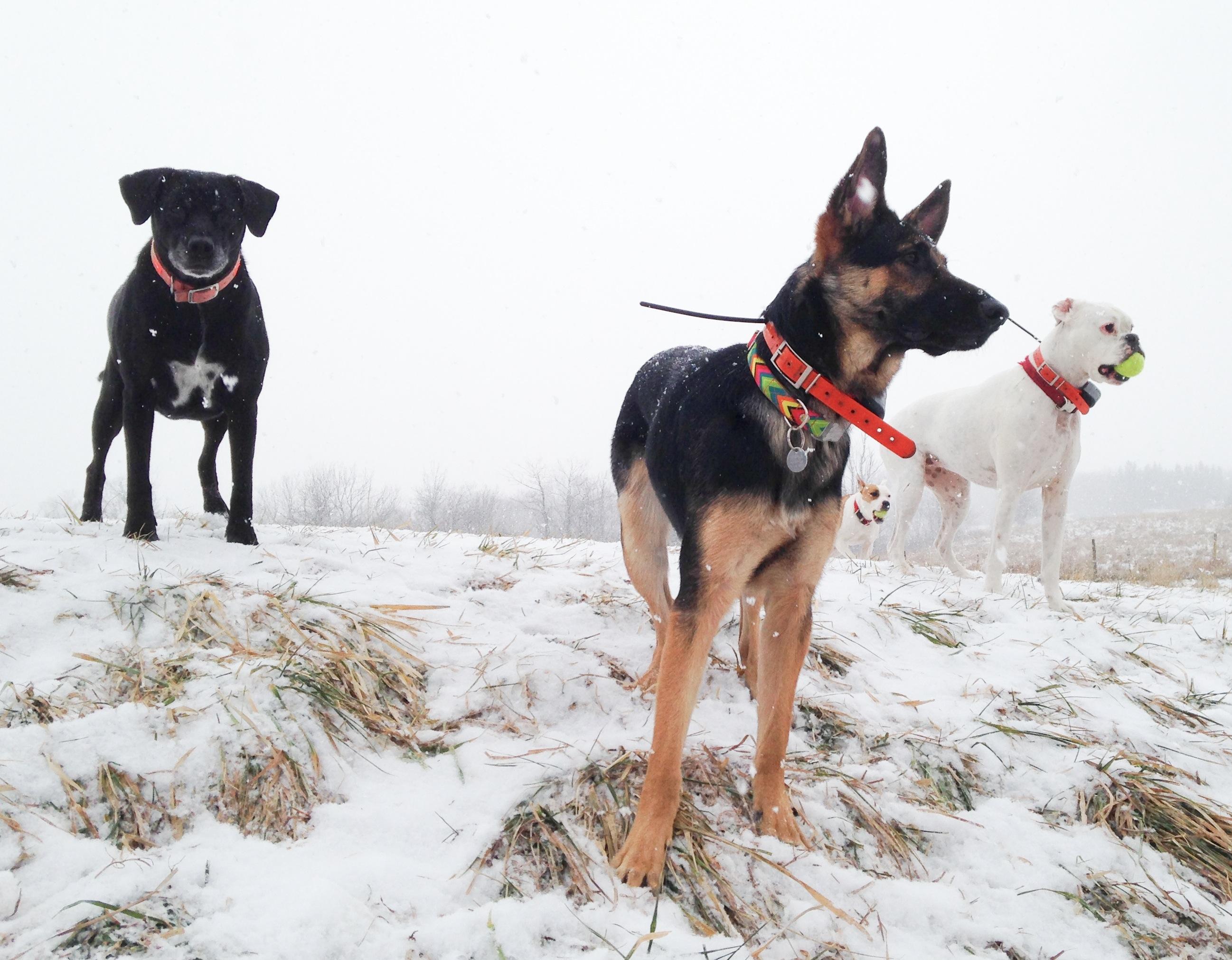 Stella, Mishka, Nola