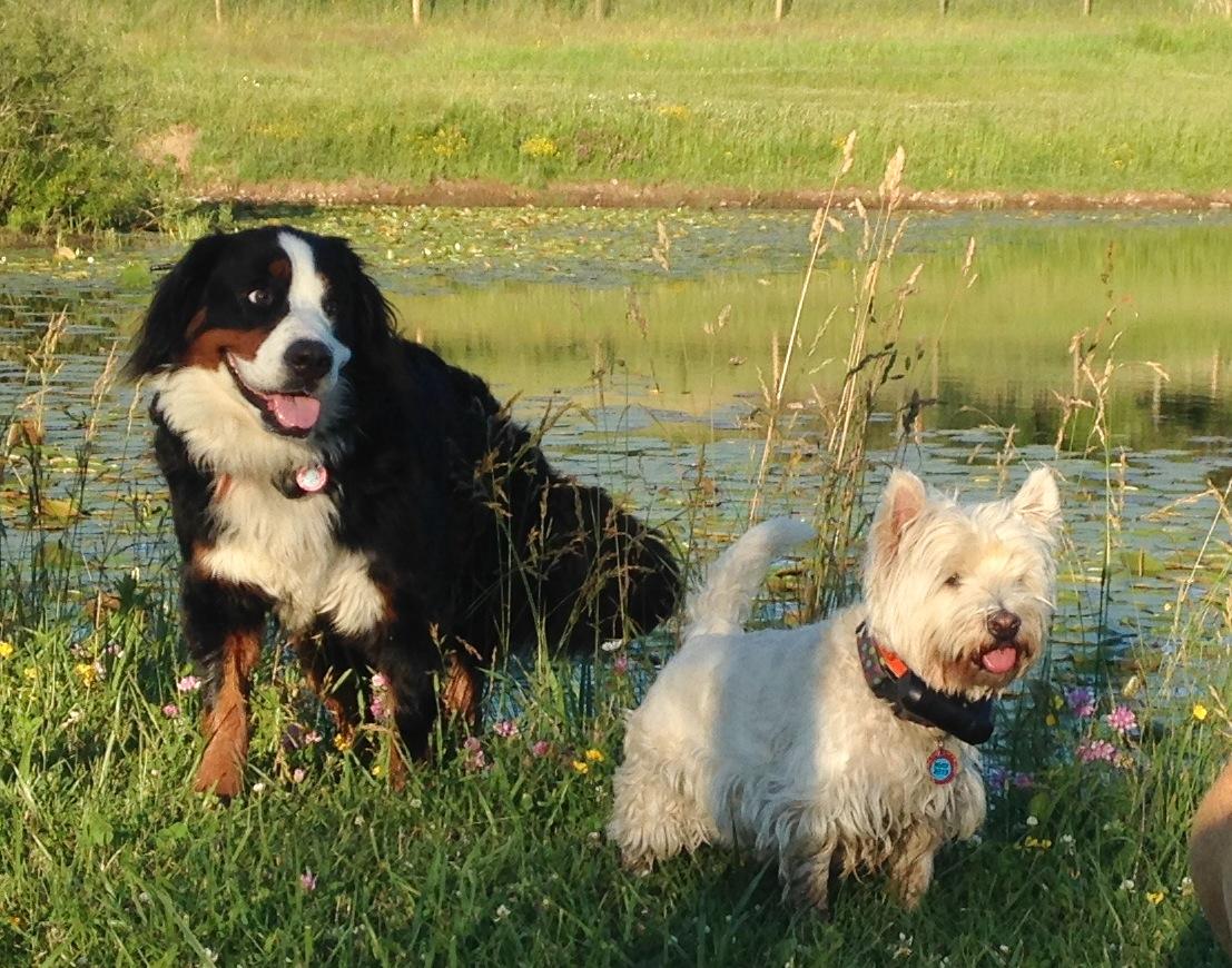 Bailey & Sadie