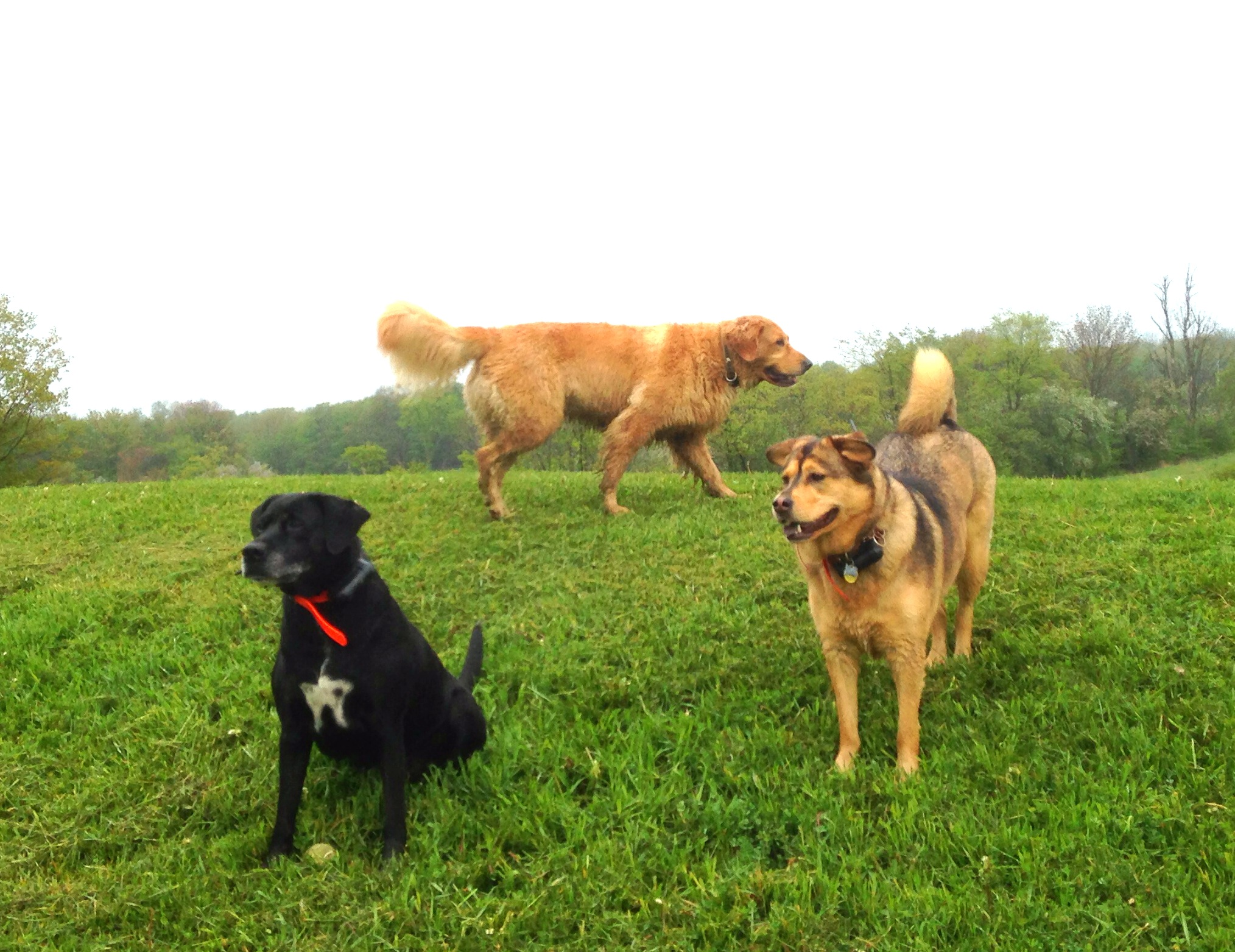 Stella, Frankie, Sofie